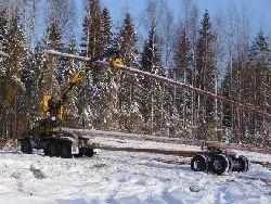 Срубы, сделанные из зимнего леса